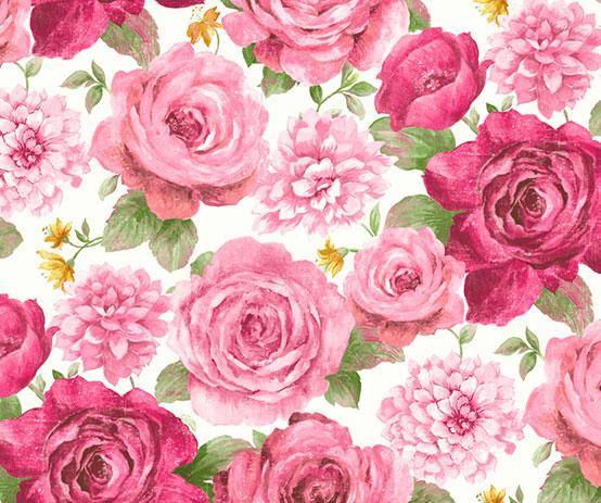 bloom rose white