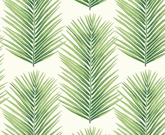 palmera-fern-leafy-greens-thumbnail